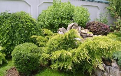 Amenajare conifere1