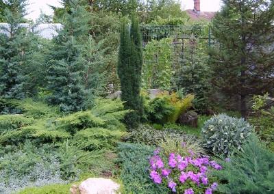 conifere rocarie
